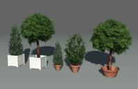 Tree in box
