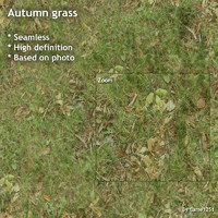 Autumn grass