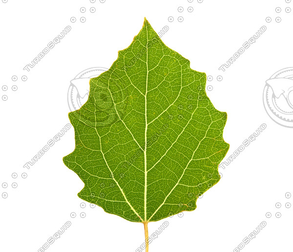Green Leaf_p.jpg