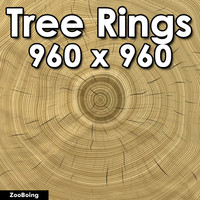 Wood 043 - Tree Rings