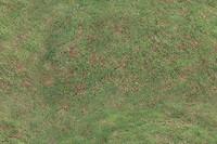 Tileable Grass Texture