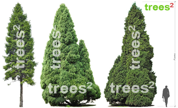 trees_square_conifer_3pack_thumbnail.jpg