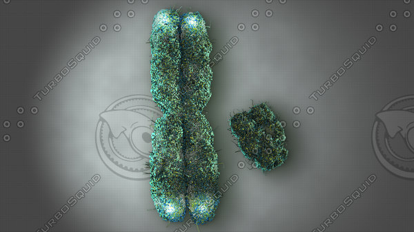 x and y chromosome on surface with telomeres.jpg