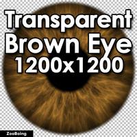 Biology 047 - Brown Eye
