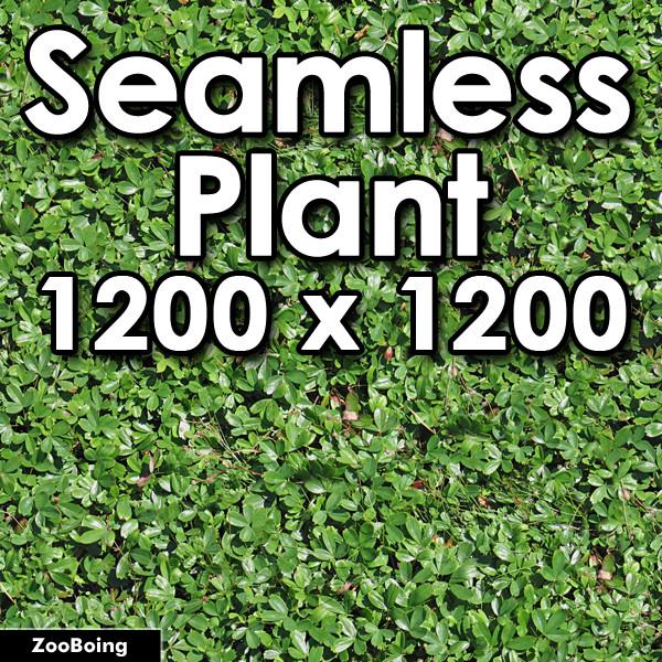 1456 - Plant-T1.jpg
