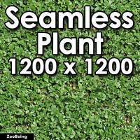 Plant 020 - Bush