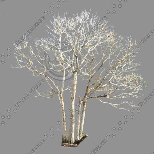 dry-tree-500PX.jpg