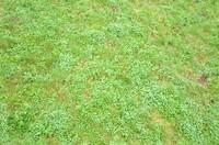 tex_grass01