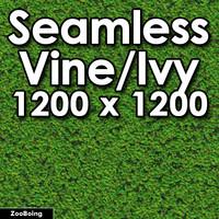 Plant 003 - Ivy