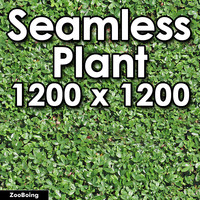 Plant 018 - Bush