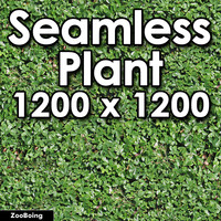 Plant 019 - Bush