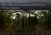 RED WOOD FOREST 360 HDR PANORAMA # 155