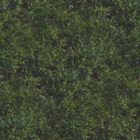 Seamless Bush Texture
