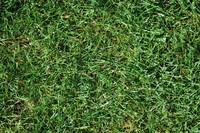 Grass_Texture_0003