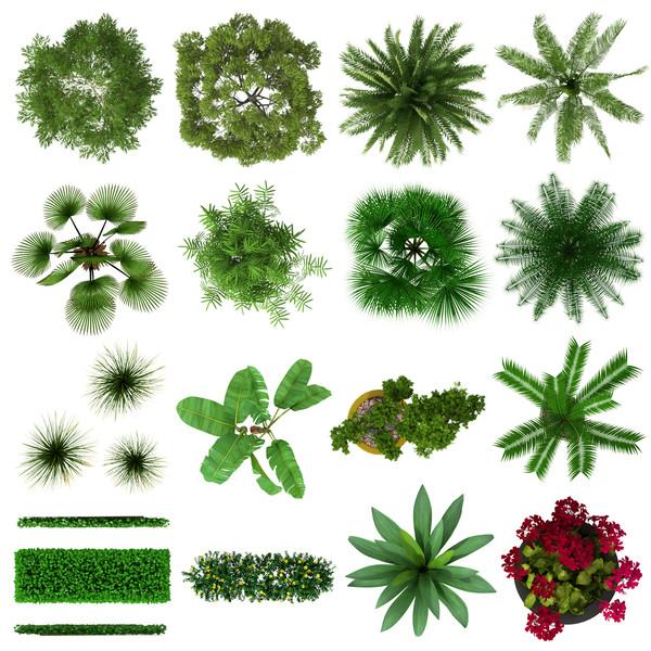 G0004 Tropical Plants S.jpg