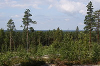 Finnish Forest Landscape