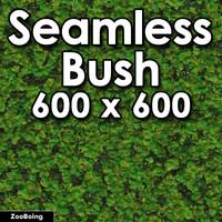 Plant 001 - Bush