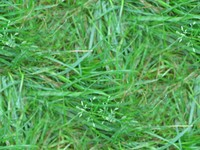 grass ground