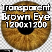 Biology 044 - Brown Eye