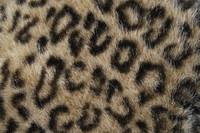 Fur_Texture_0011
