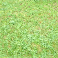 tex_grass02