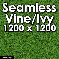 Plant 002 - Ivy Vine