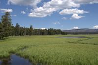 Level Landscape grassland