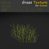 Plains Grass Texture