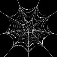 Spider Web Alpha Tranparency