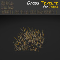 Dry Plains Grass Texture