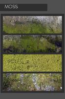 Moss-Four-Texture
