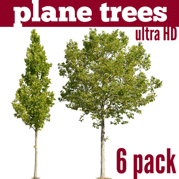 planetree-6pack.jpg