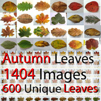 Autumn Fall Leaves HUGE collection Maple Oak Walnut Ivy Wine Needles