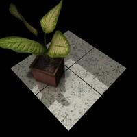 Granite_014 Asa Branca