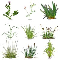Foliage Grass and Vegetation textures