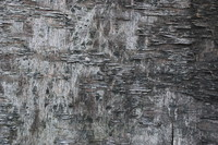 Wood_Texture_0004