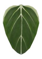 Painted Leaf texture