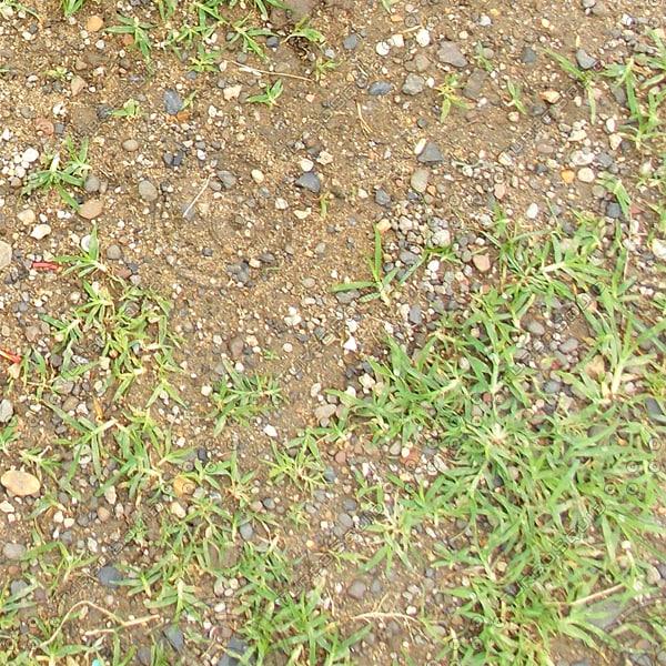 Texture jpg grass texture soil