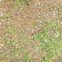 Soil with Grass Texture Map