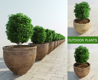 3d model bushes ancient pots