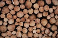 Log_Texture_0002