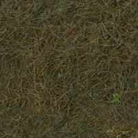 Dry Pine Leaves Ground