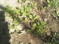 Soil Grass