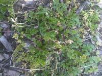 Green Soil Grass