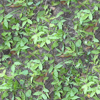 Leaf Ground Texture