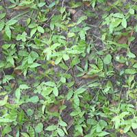 Leaf Ground Texture