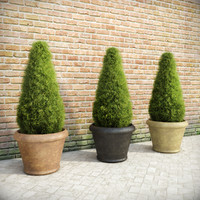 fir plants pots 3d model