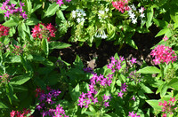 flower bed1