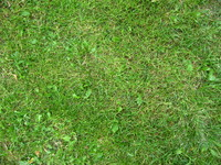 Seamless grass texture pack