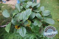 Plant Texture 04